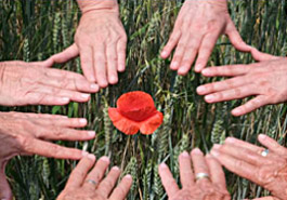 Hände rund um eine Klatschmohnblüte